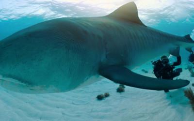 Nat Geo - Nadar con Tiburones