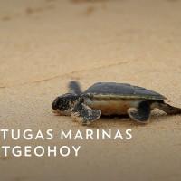 Imagen de Tortugas marinas