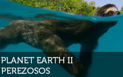 Planet Earth perezosos