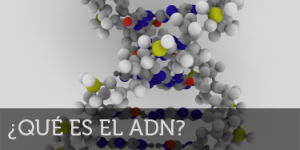Qué es el ADN