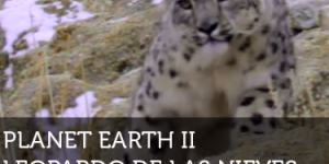 BBC Planet Earth II Leopardo de las Nieves